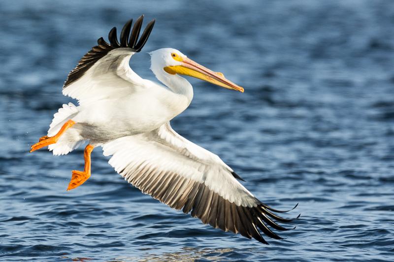 Pelican Landing 2 2-7-15