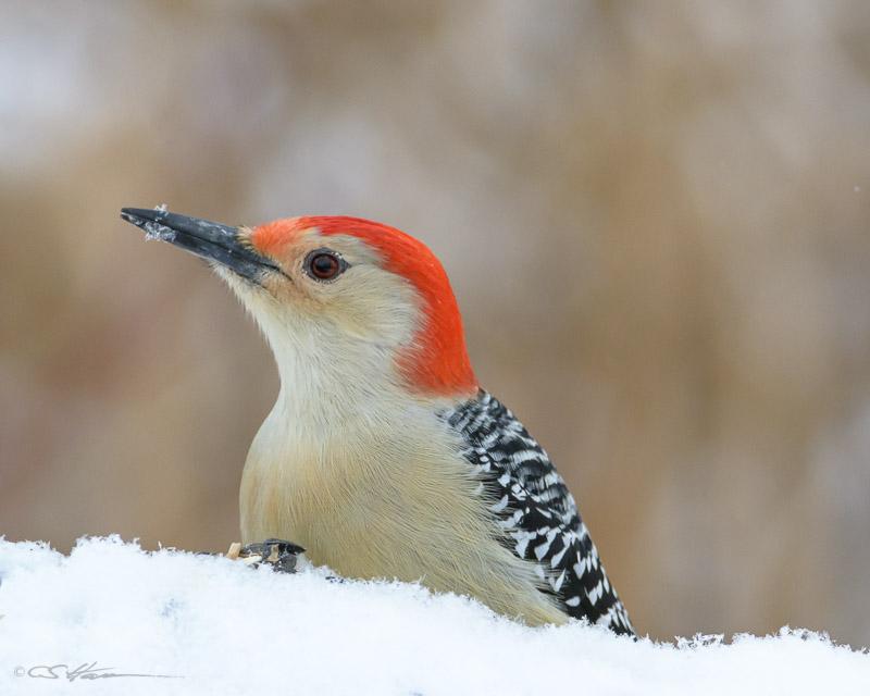 Woodpecker-2-1-1-14