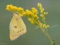 Butterfly-2 8-17-13
