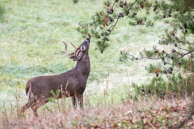 Buck-1-11-11-14