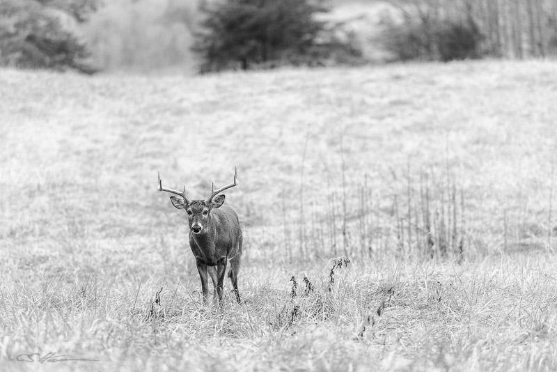 Buck-2-11-11-14