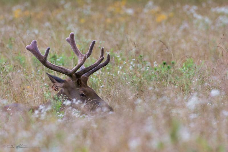 Elk-4-6-29-14