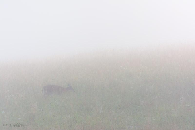 Misty-6-29-14
