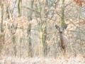 Deer 4-7-13