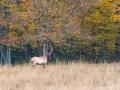Elk 10-10-13