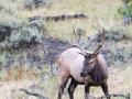 Elk-3-9-1-14