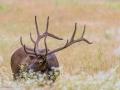 Elk-5-6-29-14