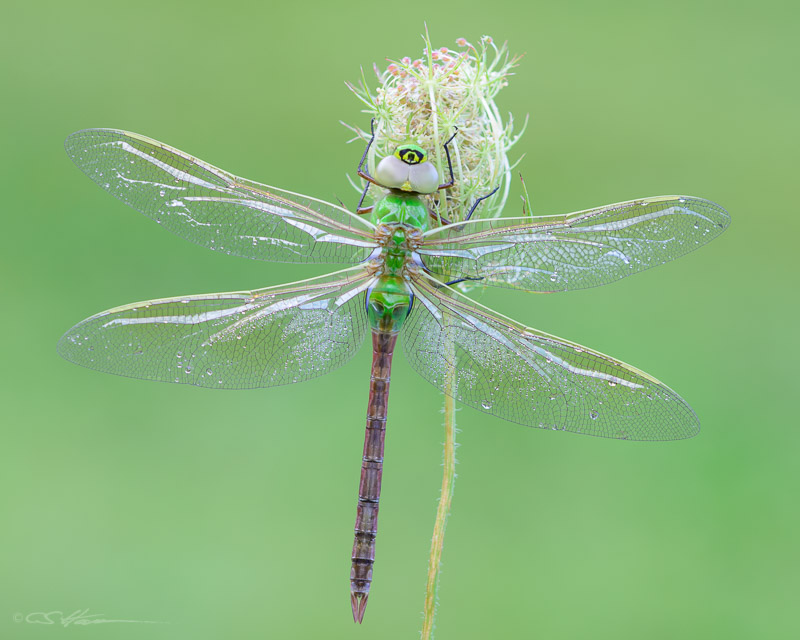 Dragonfly-3 8-18-13