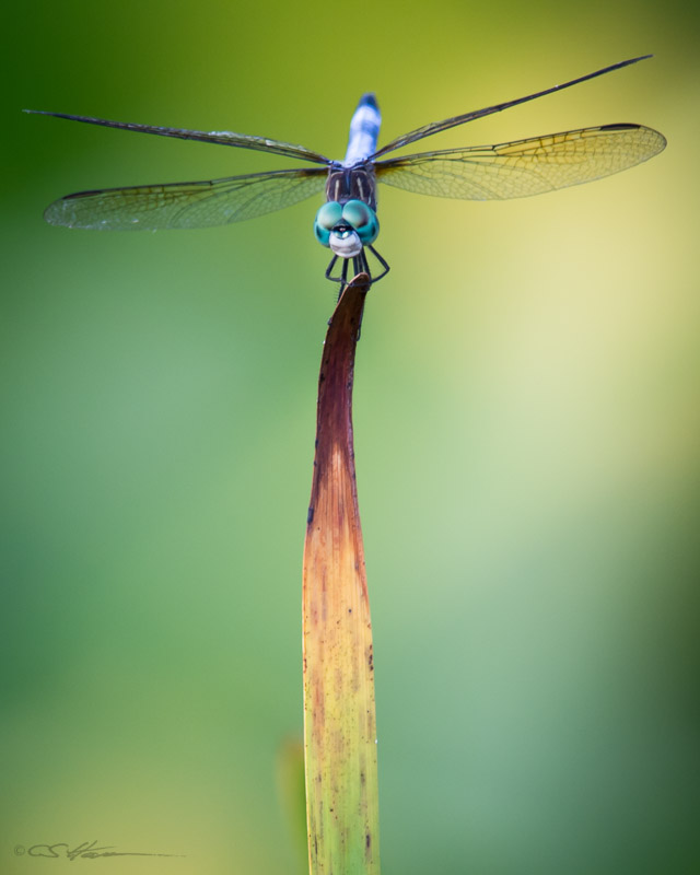 Dragonfly 7-17-13