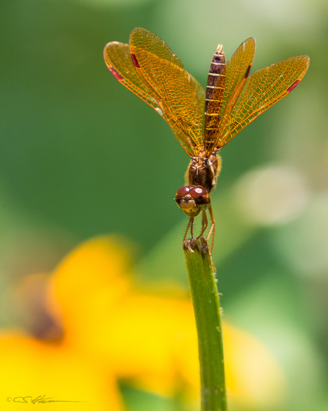 Dragonfly 7-20-13