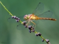 Dragonfly-8-10-14