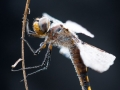 Dragonfly-9-14-14