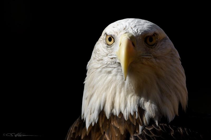 Eagle-2 10-19-13