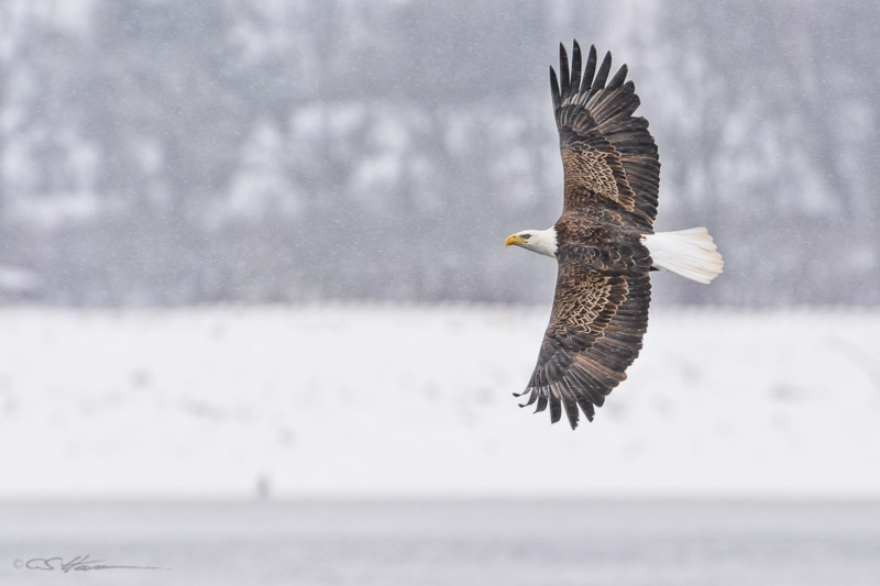 Eagle-4-2-1-14