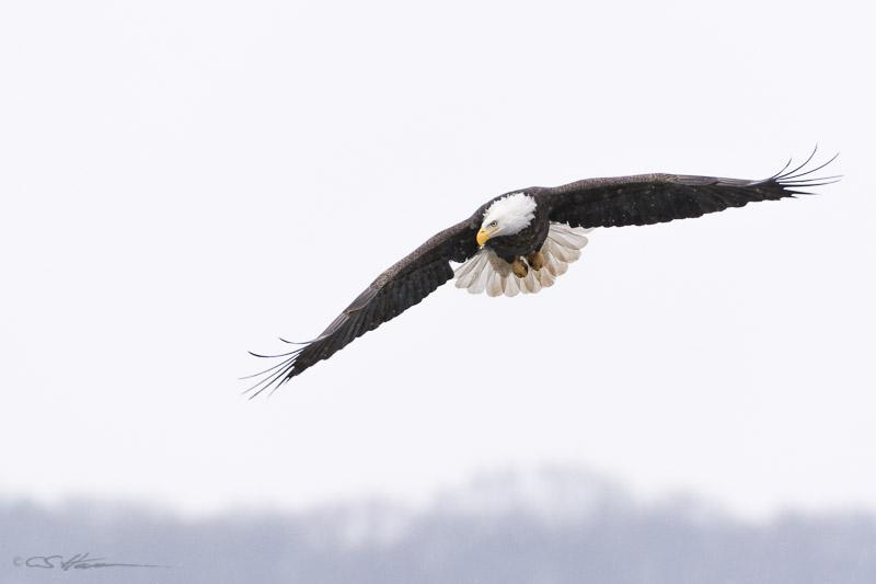 Eagle-6-2-1-14