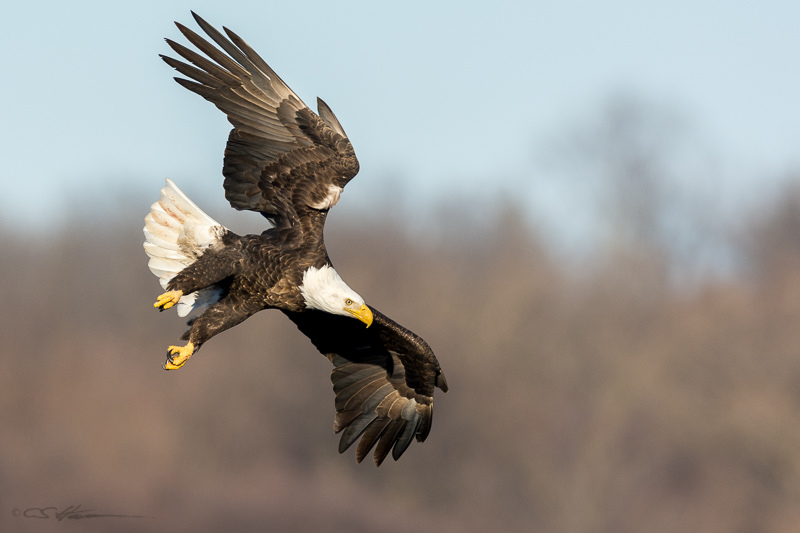 Eagle Attack 2 1-30-15