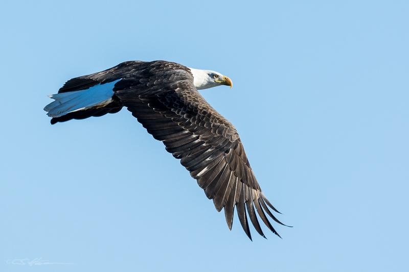 Eagle Flight 1-30-15