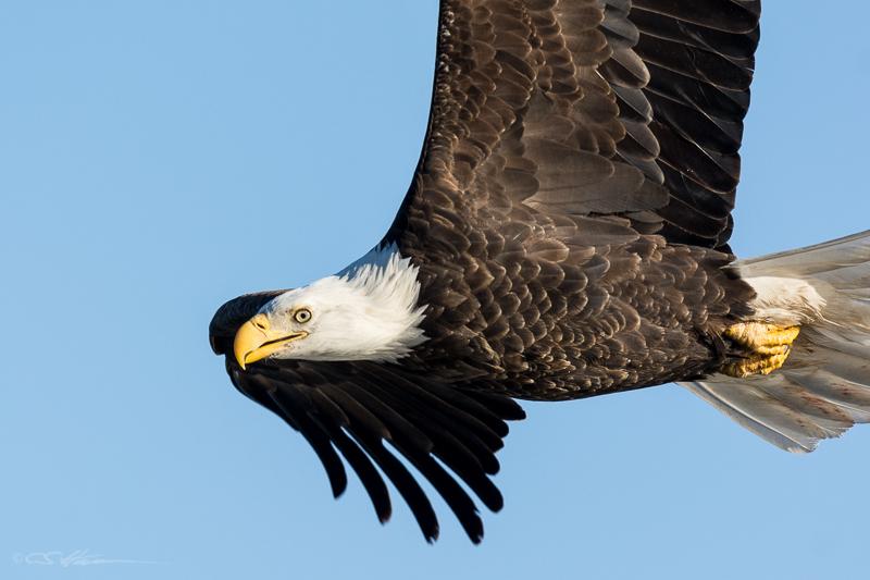 Eagle Flight 3 1-30-15