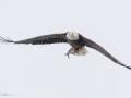 Eagle-5-2-1-14