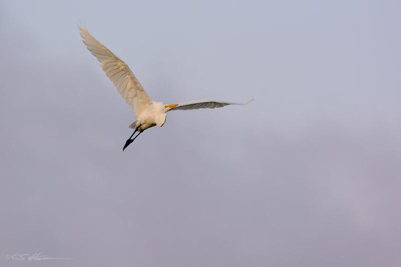 Egret-2 8-31-13