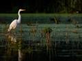 Egret-3 8-31-13