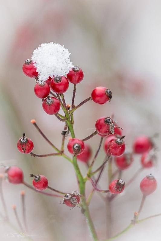 Berries-11-19-14