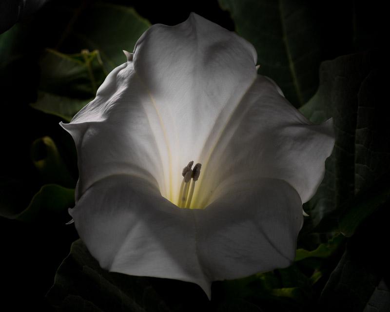 Moon-Flower-7-121-14