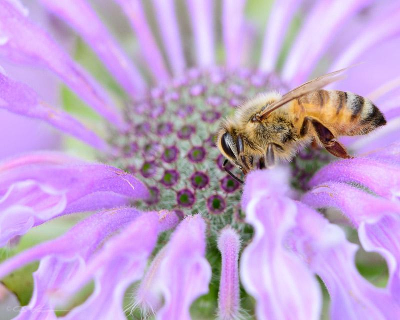 Bee 8-31-13