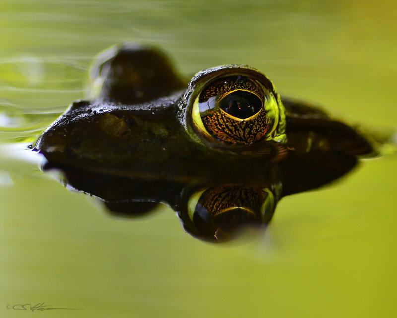Bullfrog 7-28-12