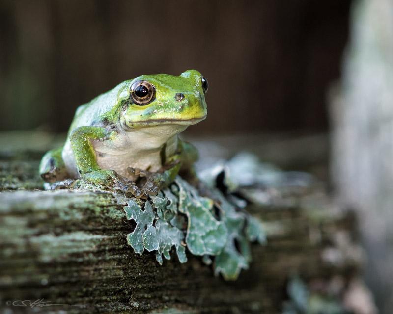 Frog-2 8-17-13