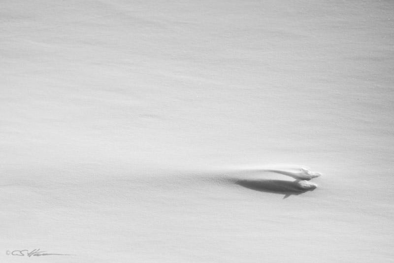 Snow 1-22-13