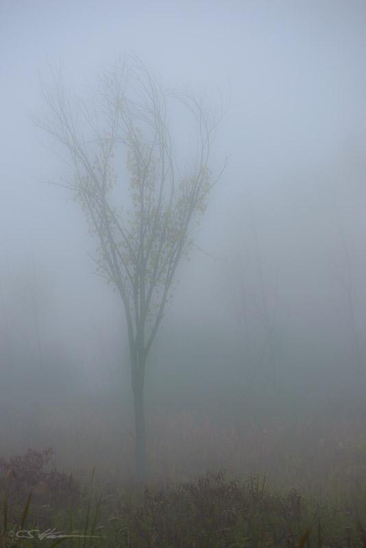 Mist 10-12-13