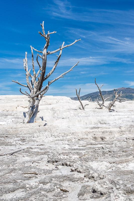 White-Tree-9-2-14