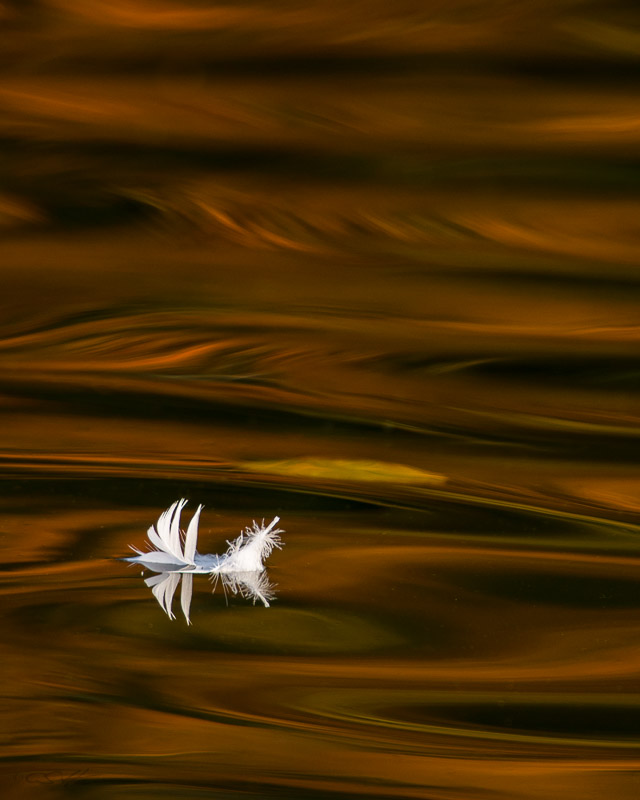 Feather 10-8-12