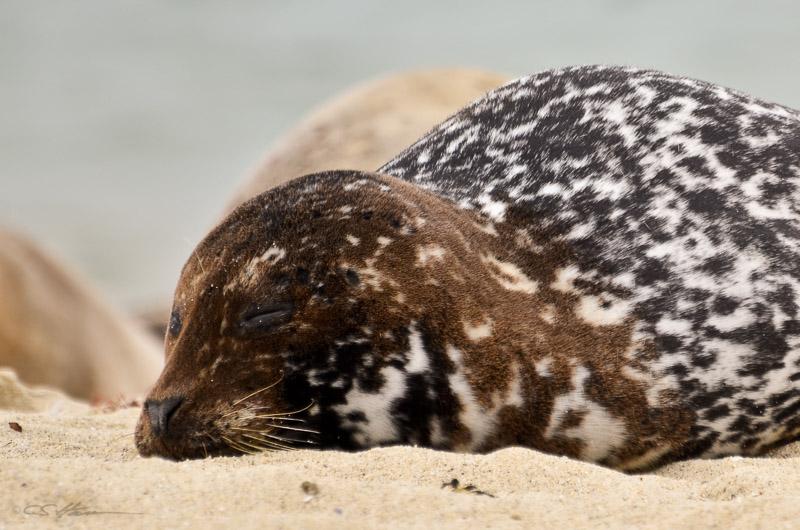 Seal-10 4-29-12