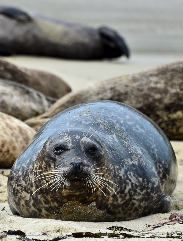 Seal-2 4-29-12