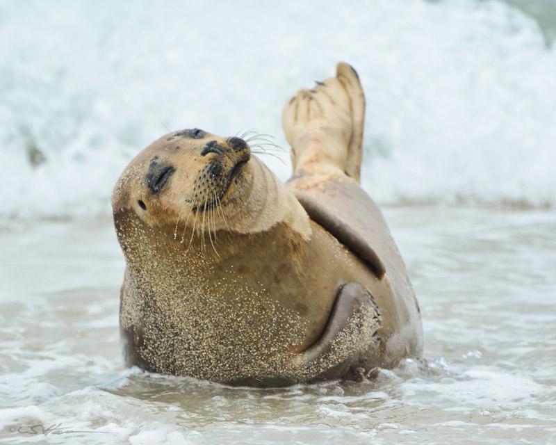 Seal-6 4-29-12