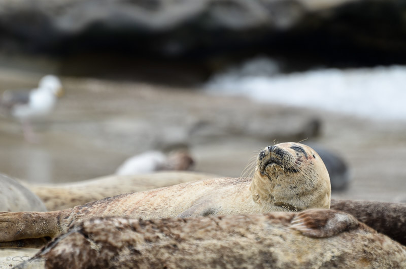 Seal-9 4-29-12