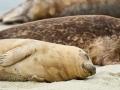 Seal-8 4-29-12