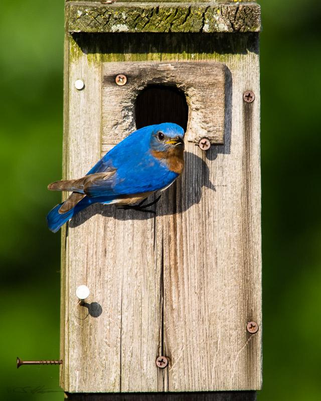 Bluebird-1 5-21-13