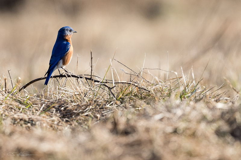 Bluebird 3-21-15