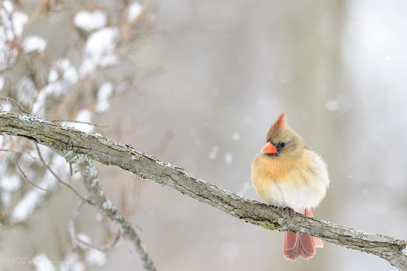 Cardinal-2 2-4-13