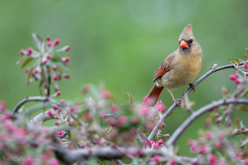 Cardinal 5-4-15
