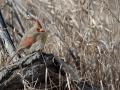 Cardinal 3-13-13