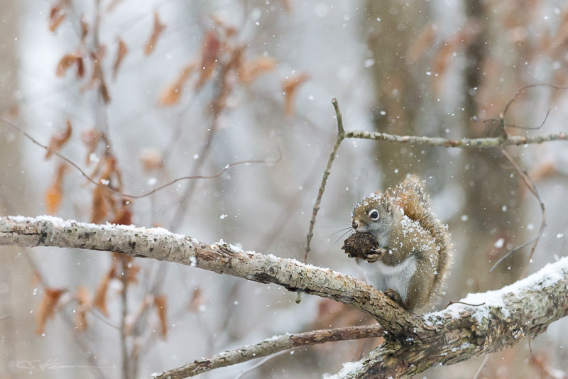 Squirrel 2-3-13