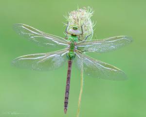 Dragonfly-3 8-18-13