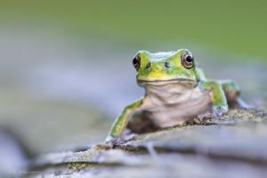 Frog 8-17-13