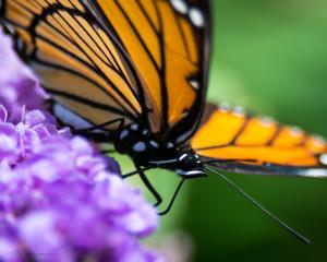 Monarch-1 7-21-13